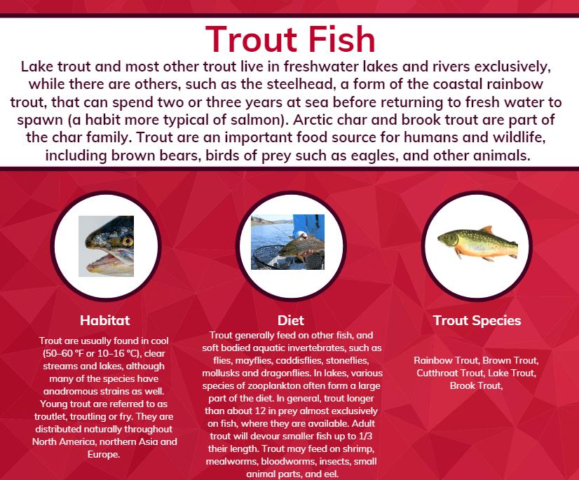 trout info